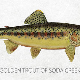 Golden Trout of Soda Creek
