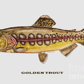 Ted Reeves - Golden Trout