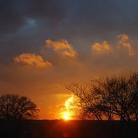 Roy Williams - Golden Winter Sunset