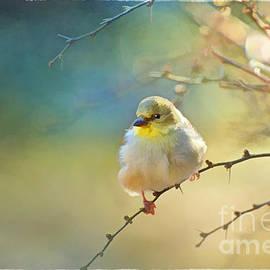 Debbie Portwood - Goldfinch in morning light - Digital Paint I