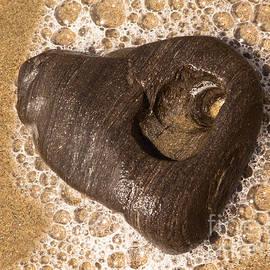 John Daly - Goleta Beach Heart