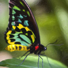 David Millenheft - Goliath Birdwing Butterfly