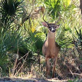 Rosanne Jordan - Good Afternoon Deer