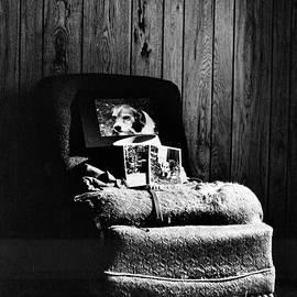 ImagesAsArt Photos And Graphics - Goodbye Schatzi My Dog