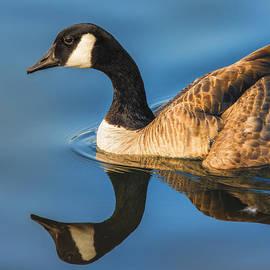 Bill Tiepelman - Goose Symmetry