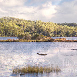 Elaine Teague - Gordon River in Tasmania