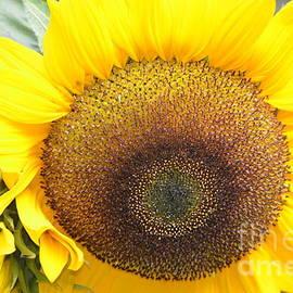DejaVu Designs - Gorgeous Sunflower