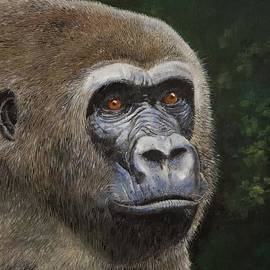 Bill Dunkley - Gorilla Portrait