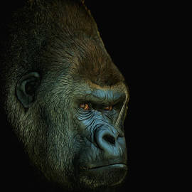Ernie Echols - Gorilla Portrait Digital Art
