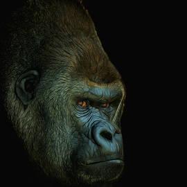 Ernie Echols - Gorilla Portrait Digital Art