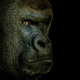 Ernie Echols - Gorilla Portrait