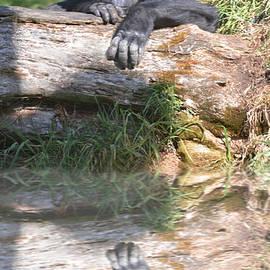 Jim Fitzpatrick - Gorilla Watching Behind a Tree