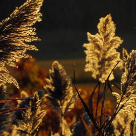 Dianne Cowen - Graceful Golden Glow