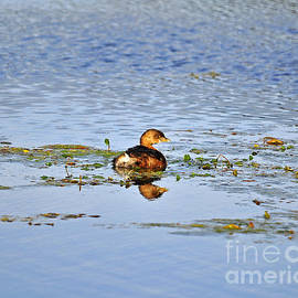 Al Powell Photography USA - Graceful Grebe