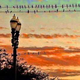 Norman Gabitzsch - Grackles on the Line