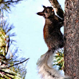 Bob Johnston - Grand Canyon National Park Kaibab Squirrel