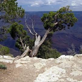 Philomena Zito - Grand Canyon View 5