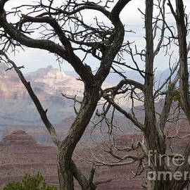 Marlene Rose Besso - Grand Canyon View