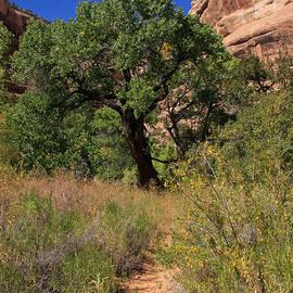 Aidan Moran - Grand Gulch Canyon - Utah