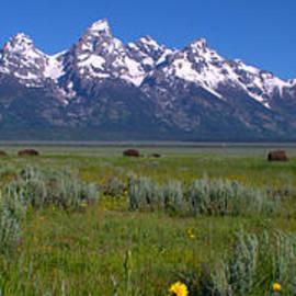 Brian Harig - Grand Teton Bison