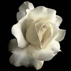 Jennie Marie Schell - Grandeur Ivory Rose Flower