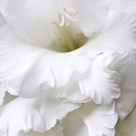 Jennie Marie Schell - Grandiose White Gladiola Flower