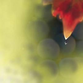 Kume Bryant - Grape Leaf Water Drop