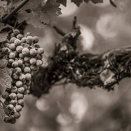 Clint Brewer - Grapes in Grey 1