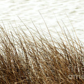 Artist and Photographer Laura Wrede - Grass Down by the Shore of Virginia Beach