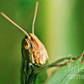 Dan Radi - Grasshopper