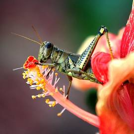 Lisa Vaccaro - Grasshopper Feasting