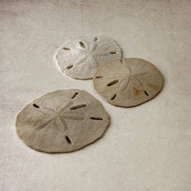 Brooke Ryan - Gray Taupe and Beige Sand Dollars