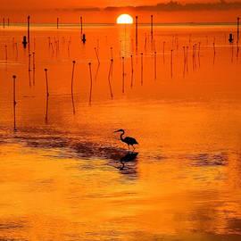 Stuart Harrison - Great Blue Heron