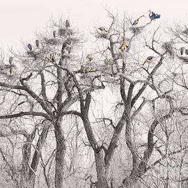 James BO  Insogna - Great Blue Herons Colonies