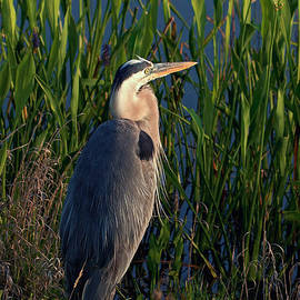 Dawn Currie - Great Blue Morning