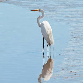 Regina Geoghan - Great Egret and Reflection