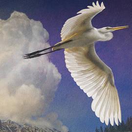 R christopher Vest - Great Egret Flight High Over Colorado