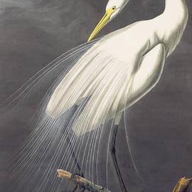 John James Audubon  - Great Egret