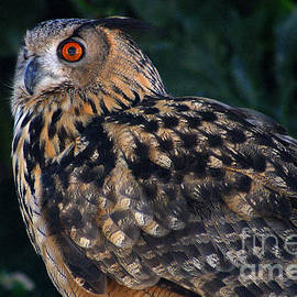 Gary Gingrich Galleries - Great Horned Owl-2
