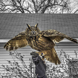 John Straton - Great horned owl v2