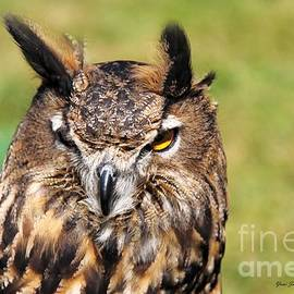 Yumi Johnson - Great Horned Owl