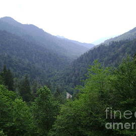 R A W M   - Great Smokey Mountains