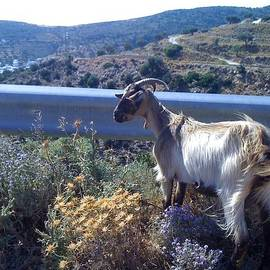 Karen Rowe - Greek Goat