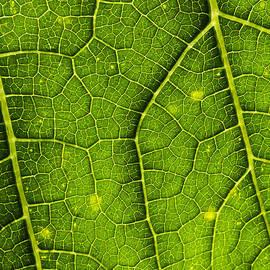 Morgan Wright - Green Abstract
