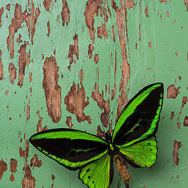 Garry Gay - Green Butterfly On Old Green Wall