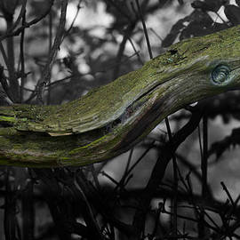 Clive Beake - Green  Dragon