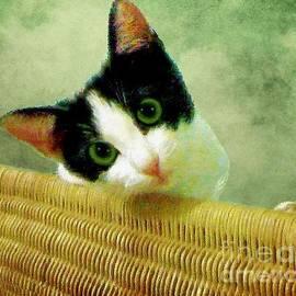 Janette Boyd - Green Eyed Cat on Wicker