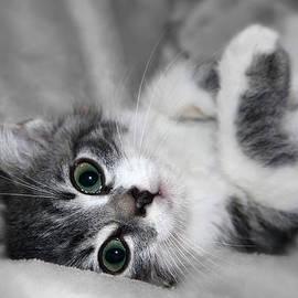 Teresa Zieba - Green Eyed Kitten