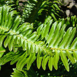 Baslee Troutman - Green Forest Ferns Art Prints Fern Branches leaves