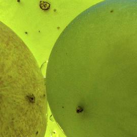 Jean Noren - Green Grape Close up